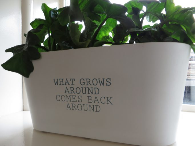 "Planten in het Metabolic Lab: ""What grows around comes back around."""